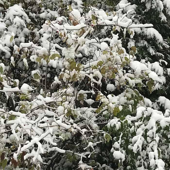 The Hit List - First snowfall