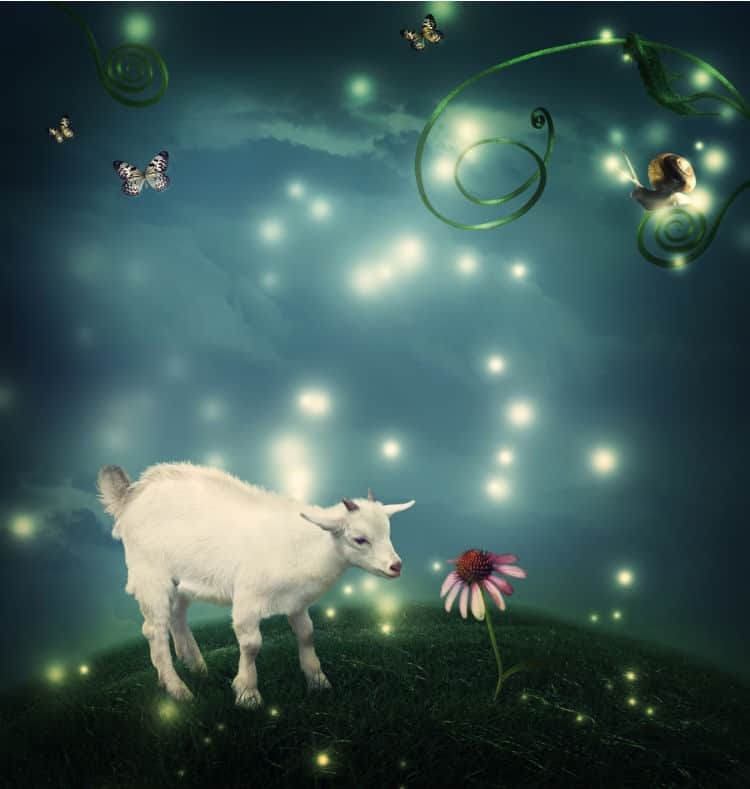 New Moon in Capricorn 2021- and Tarot Readings for Each Zodiac Sign