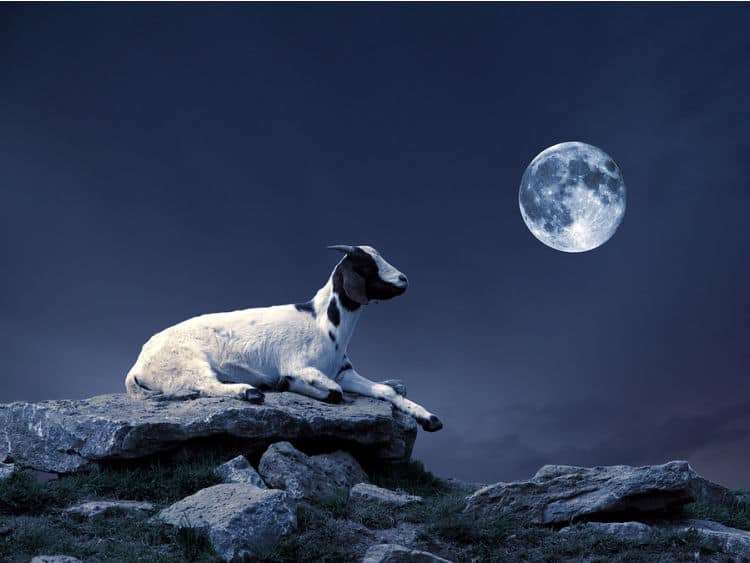 Full Moon in Capricorn 2021 - and Tarot Readings for Each Zodiac Sign